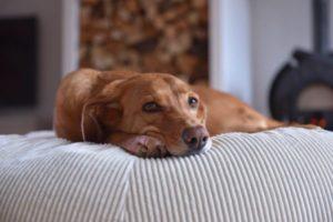 Orthopädisches Hundekissen mit Bio Dinkel gefüllt und schickem Cord Design