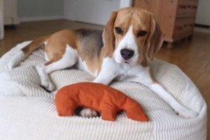 Kleiner Hund auf orthopädischem Hundekissen mit Öko Hundespielzeug ungiftig