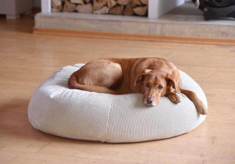 Hund liegt auf seinem edlen Hundekissen aus Cord