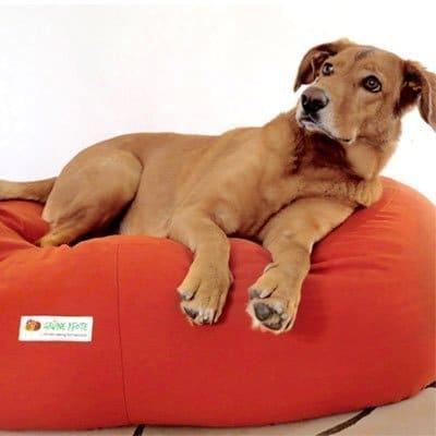 Hund liegt auf Hundekissen mit orangefarbenem Bezug der wechselbar ist