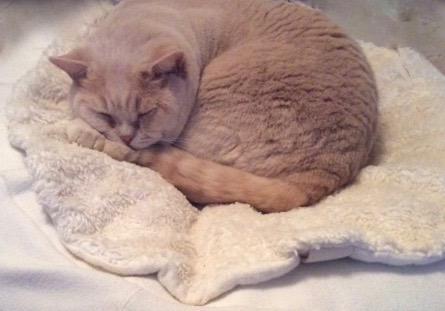 Ko baumwoll katzendecken zum kuscheln auf dem sofa oder for Sofa kuscheln