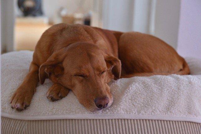 Weiße ovale Kuschelliegedecke auf Hundekissen aus Teddyplüsch bei 40 Grad waschbar