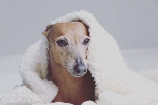 Warme weiche Kuscheldecke für Hunde aus ökologischer Baumwolle in weiss