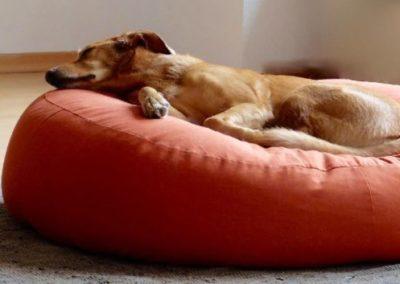 kuscheliges orthopädisches Hundebett mit Bio Dinkelfüllung orange