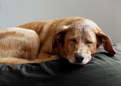 Gruene-Pfote-Granada-Anthra-Hund
