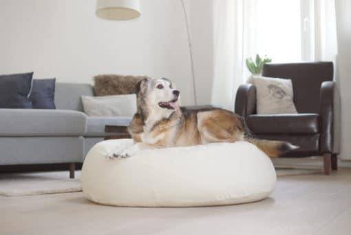 Gruene-Pfote-Granada-creme-Hund