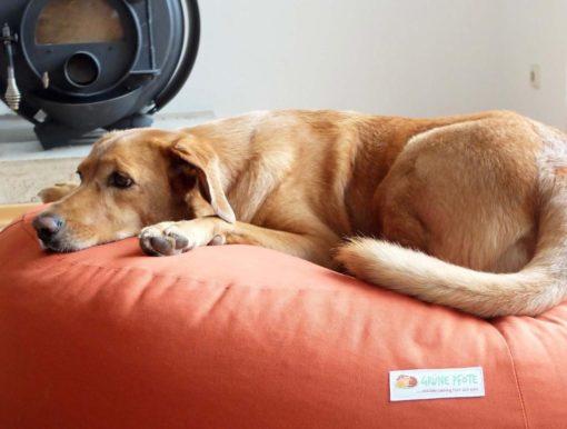Gruene-Pfote-Granada-terracotta-Hund