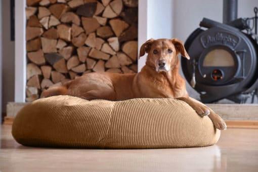Gruene-Pfote-Stockholm-Hund