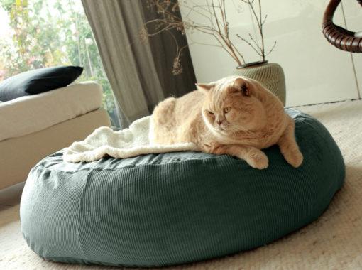 orthopädisches Katzenkissen gegen Arthrose und Gelenkschmerzen aus Bio Breitcord Baumwolle und Dinkelinhalt in oval Grösse S M