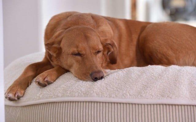 Natürliche Hundebetten Hundekissen mit weicher Hundedecke aus Bio Baumwolle