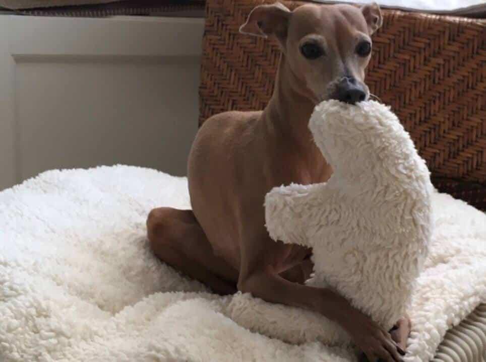 ökologisches Hundespielzeug Stofftier Eisbär aus biologischer Plüsch Baumwolle mit Füllung ohne Schadstoffe