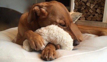 Ökologisches Hundespielzeug schadstofffrei aus Plüsch für große & kleine Hunde