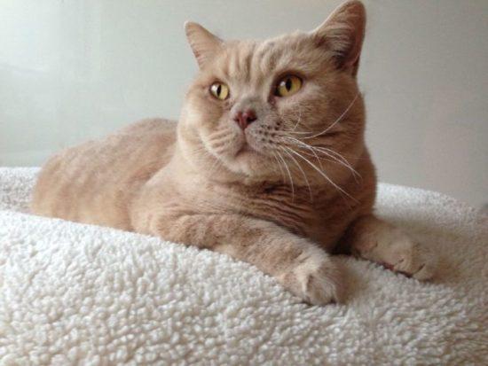 sehr weiche Katzendecke kuschelig warm aus Öko Teddyplüsch in Cremeweiss